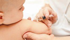 Проведение прививок