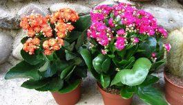 Комнатные растения зимой стали расти лучше