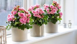 Горшечные растения или букет – что подарить девушке