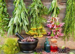 Фитолекарства — натуральные растительные препараты