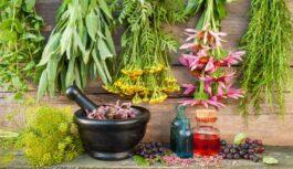 Лекарственные травы: полезные свойства ноготков календулы